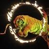 Цирки в Матвеевке
