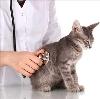 Ветеринарные клиники в Матвеевке